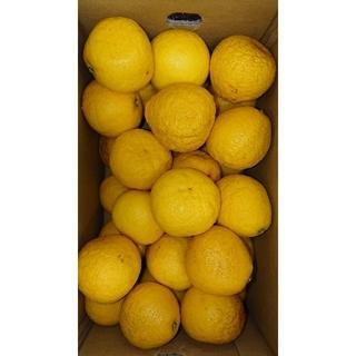 小夏 高知県産 Lサイズ 5kg ご家庭用 温室(フルーツ)