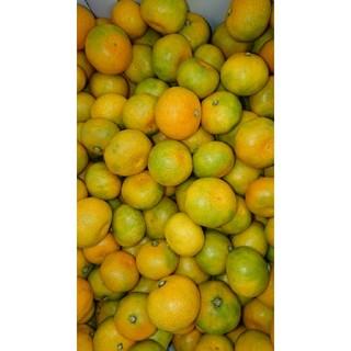 山北温室みかん 早生 緑混じり 3S~小玉 5kg 高知県産 ご家庭用
