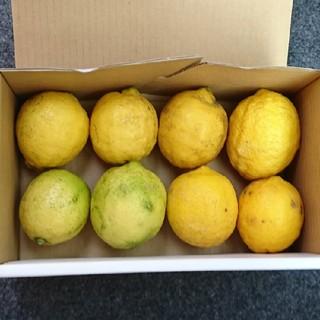 トモティ様専用 広島県産 無農薬レモン 5キロ(フルーツ)