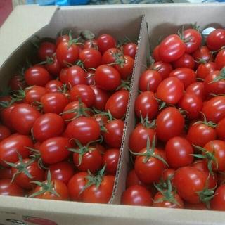 ミニトマト(甘っ子) 3kg(野菜)