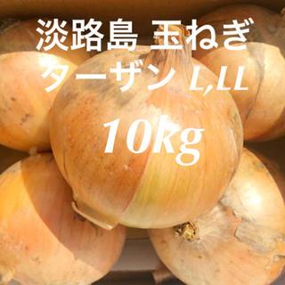 淡路島 玉ねぎ ターザン L・LL 10kg