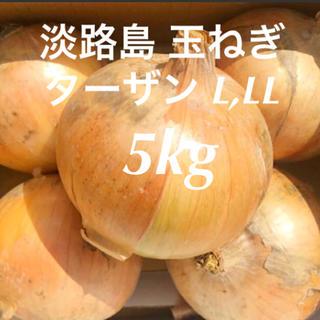 農家直送 淡路島 玉ねぎ ターザン L・LL 5kg