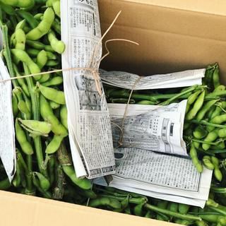 枝付き早生枝豆 朝採り 湯あがり娘 3kg 農薬不使用 産地直送