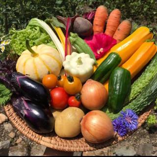 京都府産  無農薬 野菜セット 詰め合わせ  オーガニック 60サイズ 贈り物(野菜)