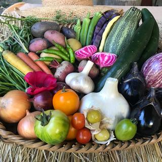 京都府産  無農薬 野菜セット オーガニック 80サイズ 贈り物(野菜)