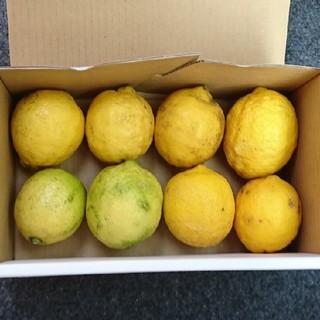 広島県産 無農薬レモン 1キロ