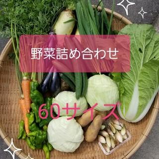 朝採り★夏野菜詰め合わせset★60サイ