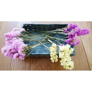【ラスト1セット】スターチス3色セット(ピンク/紫/黄)(ドライフラワー)