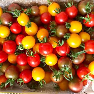 カラフルミニトマト3kg!無農薬です!(野菜)