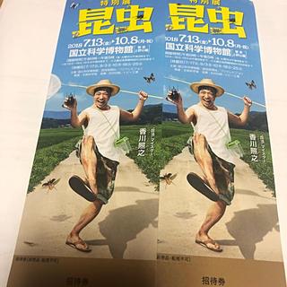特別展 昆虫 2枚セット 10/8(月・祝)まで使用可能 普通郵便送料込み(美術館/博物館)