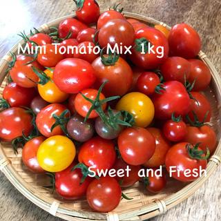 無農薬 有機栽培 朝摘み ミニトマトミックス 1kg(野菜)