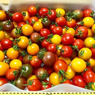 色鮮やか!無農薬カラフルミニトマト1kg!(野菜)
