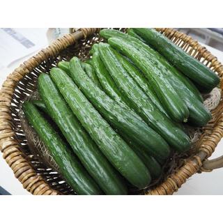 熊本産 きゅうり10㎏ 送料込 新鮮♪(野菜)