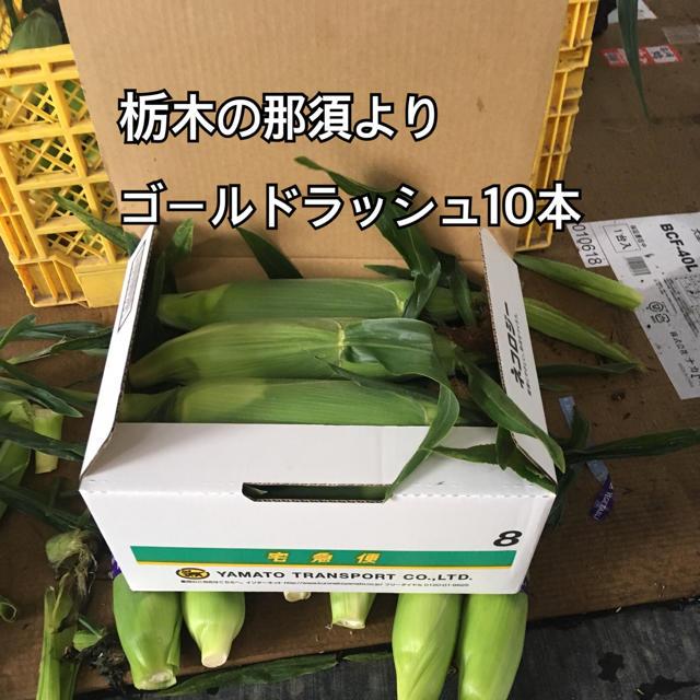 那須よりトウモロコシ10本送料込 食品/飲料/酒の食品(フルーツ)の商品写真