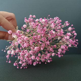 かすみ草ドライフラワー ピンク(ドライフラワー)