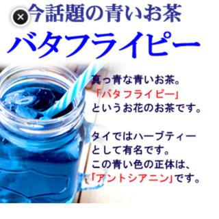 バタフライピー(茶)