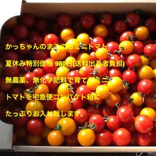 無農薬、無化学肥料で育てた、かっちゃんのまごころミニトマト(フルーツ)