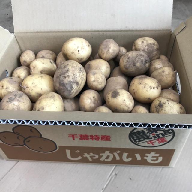 【ラクマ定額パック】新じゃがいも「キタアカリ10kg」 食品/飲料/酒の食品(野菜)の商品写真