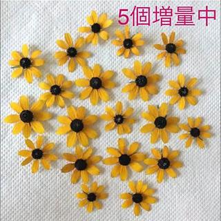 ルドベキア ドライフラワー 花材(各種パーツ)