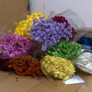 スターフラワー ミニ・マルセラ 100本花材 ドライフラワー (ドライフラワー)