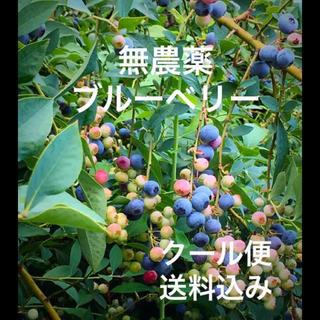 無農薬  ブルーベリー  1kg  産地直送   クール便  送料込み(フルーツ)