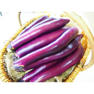 熊本県産 長茄子 Sサイズ 送料込み♪ 約3K 農家直売(野菜)