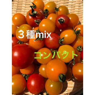 青森県産!トマト❁3種詰め合わせ(野菜)
