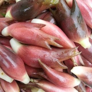 【予約販売】秋みょうが 天然 みょうが 無農薬 オーガニック 自然栽培 無肥料