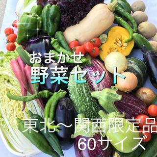 低農薬 野菜セット 60(野菜)