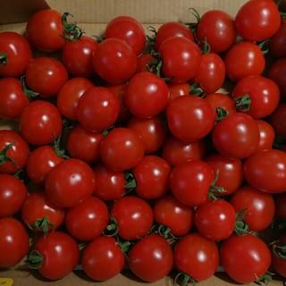 超熟ミニトマト1kg!糖度9~10の激甘(野菜)