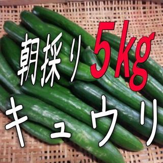 朝採りキュウリ5kg山形県産☆オマケ付き♪(野菜)