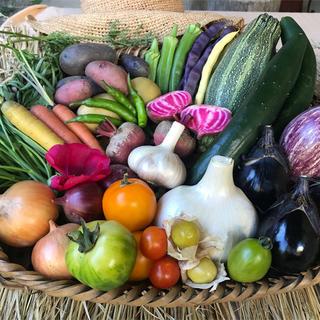京都京北産 無農薬野菜セット 安心安全 オーガニック 80サイズ 贈り物(野菜)