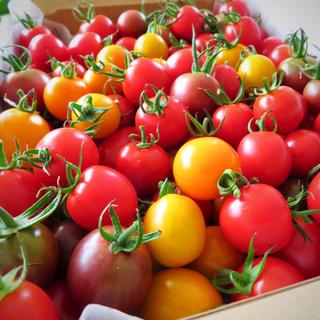コンパクトBoxいっぱい(1kg)無農薬カラフルミニトマト!(野菜)