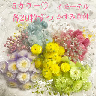 イモーテル♡人気色5カラー100粒♡かすみ草付き(各種パーツ)