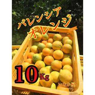 数量限定訳ありバレンシアオレンジ(フルーツ)