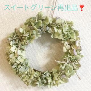 秋色紫陽花ドライリーススイートグリーン(ドライフラワー)