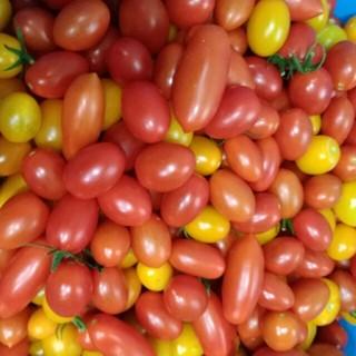 【sale】ミニトマト アイコ(野菜)