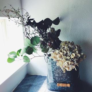 紫陽花 ユーカリ ワイヤープランツのシャビースワッグ (ドライフラワー)