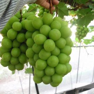 山梨県産 シャインマスカット 4kg(フルーツ)