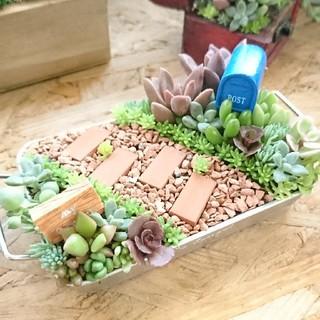 小さな箱庭  多肉植物(その他)