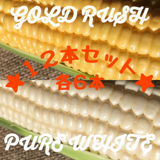 ゴールドラッシュ・ピュアホワイト(北海道美瑛産とうもろこし)