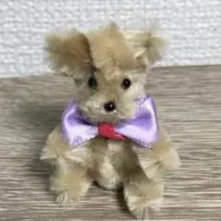 モールベア  犬