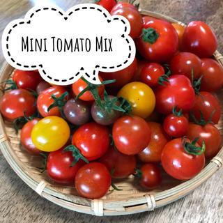 無農薬 有機栽培 朝採り ミニトマトミックス 1kg(野菜)