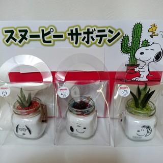 SNOOPY - スヌーピー☆サボテン 3個セット