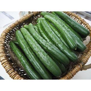 熊本産 きゅうり5㎏ 送料込 新鮮♪(野菜)