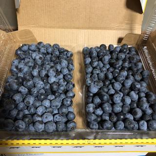 朝採り 完熟 無農薬ブルーベリー 700グラム(フルーツ)