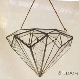 ダイヤモンド型テラリウム
