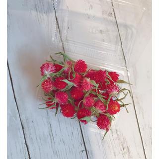 千日紅 ドライフラワー 花材