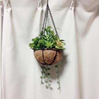 Francfranc - 造花 多肉植物