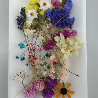 花材23 リクエストの多いかすみ草増量! レジン細工などに最適な小花のセット(ドライフラワー)